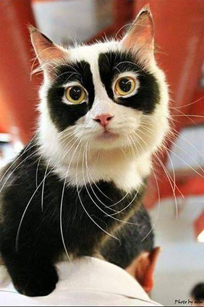 人脸猫微信表情包分享展示图片
