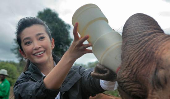 李冰冰喂大象喝水