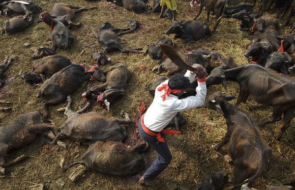 世界上男人最大的鸡儿_世界最大杀生祭祀活动
