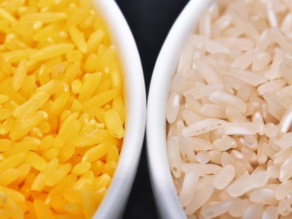 黄金大米(左)与普通大米(右)