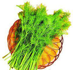 茴香酸有抗菌功效 茴香当中的茴香醚有抗菌功效,对大肠杆菌,痢疾杆菌