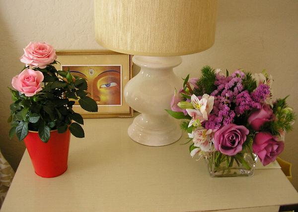 解读家居室内植物风水 室内植物摆放风水知识