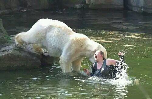盘点全球十大动物重伤人类事件