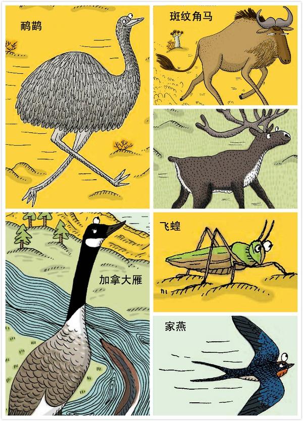 天降奇书:是动物的朋友圈
