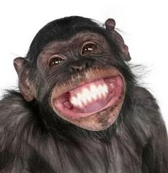 v图片最好玩的图片,竟然是免费的,让人目瞪口呆有效表情方法包图片