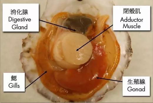 幼儿园花蛤壳手工制作大全图解
