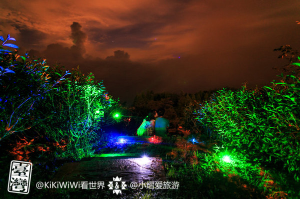 【台湾】追逐阿里山茶园的浪漫星空
