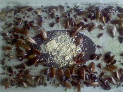家里蟑螂怎么消灭_