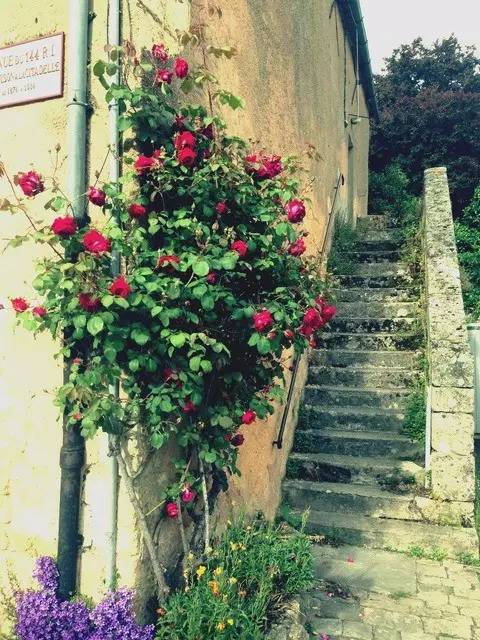 小非带去你看欧洲小镇鲜花||简直美翻啦!图片