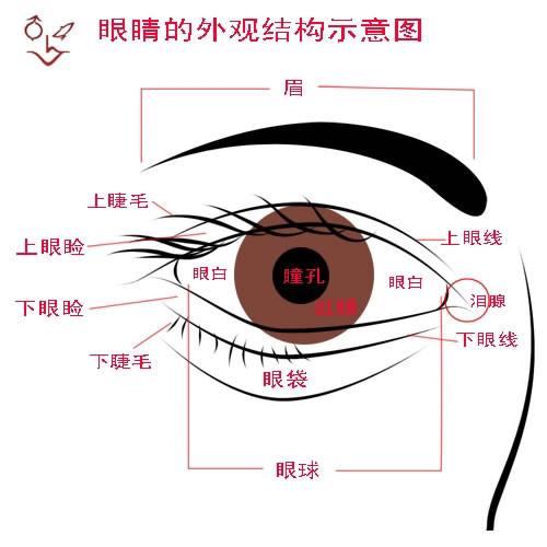 眼球结构简笔画