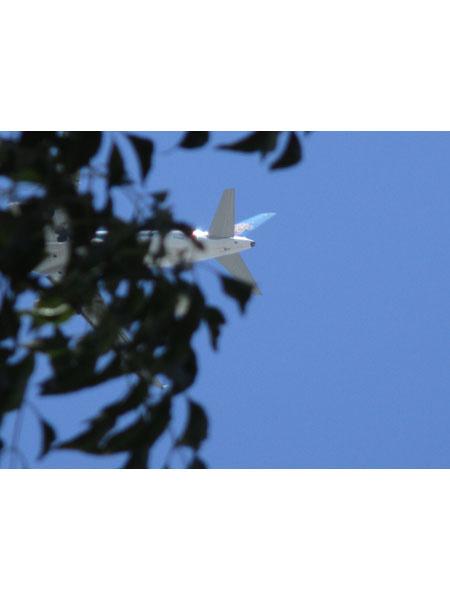 树叶粘贴画图片大全飞机