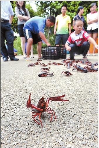 昆明和平村海鲜_昆明围剿小龙虾2年打捞10多吨