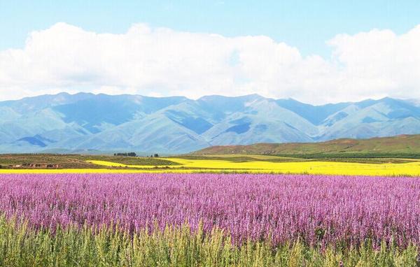 新疆的美----天山最美!图片