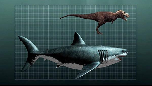 20大史前巨兽:5800万年前巨蟒身形庞大 口吞鳄鱼