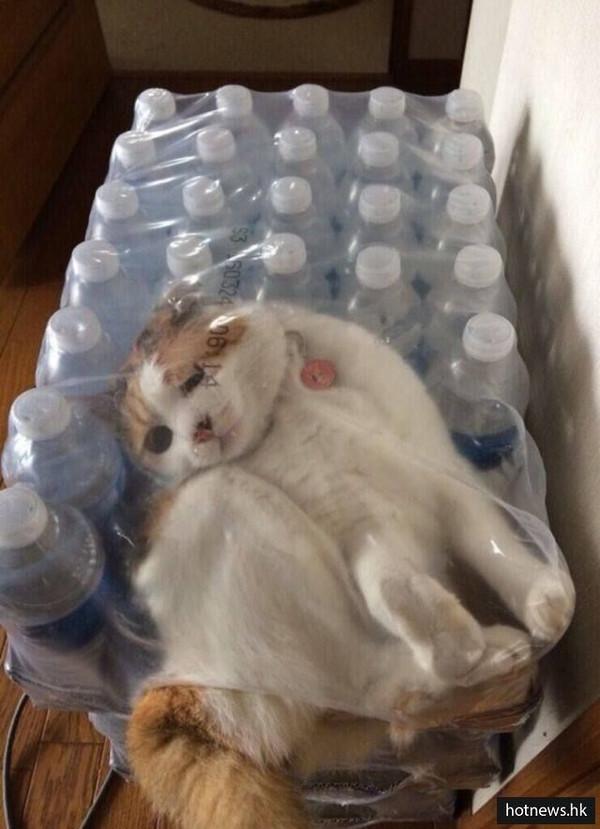 矿泉水瓶手工制作小动物