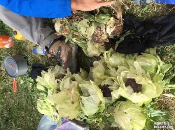 驴友在新疆天山非法采摘雪莲惹众怒 目前警方已介入调查