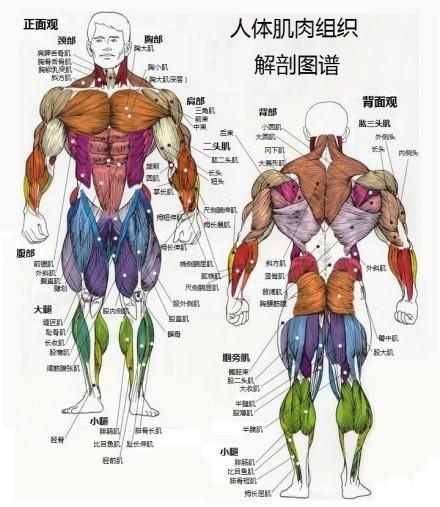 人体脂肪_15张图,看懂脂肪