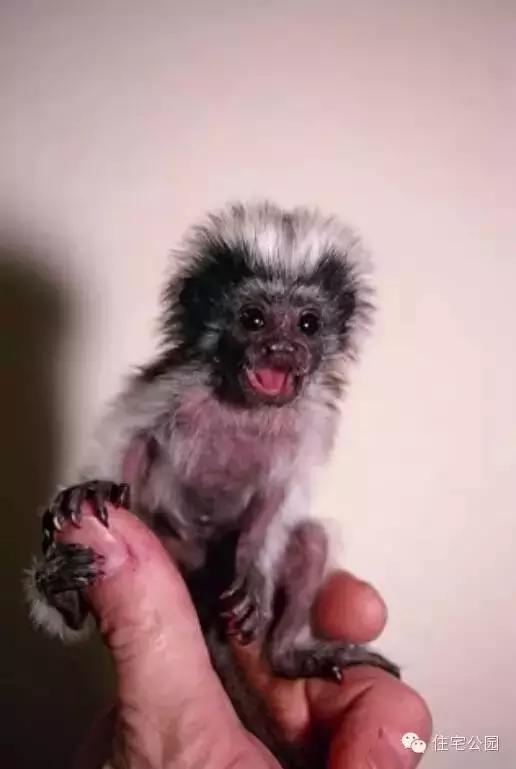 世界上最奇特的动物,你真的没见过几个!(下)