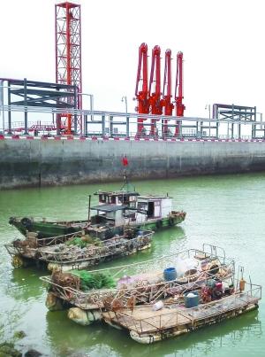 连云港海鲜种类_伏季休渔期冻品海鲜价格不涨反降
