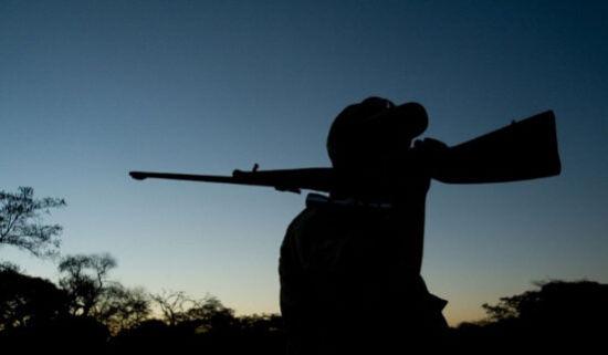 津巴布韦是狩猎者的理想之地,因为当地需要依靠狩猎增加经济收入。在当地狩猎每日需交费1000美元,每猎捕一头大象需额外交费1.1万美元。