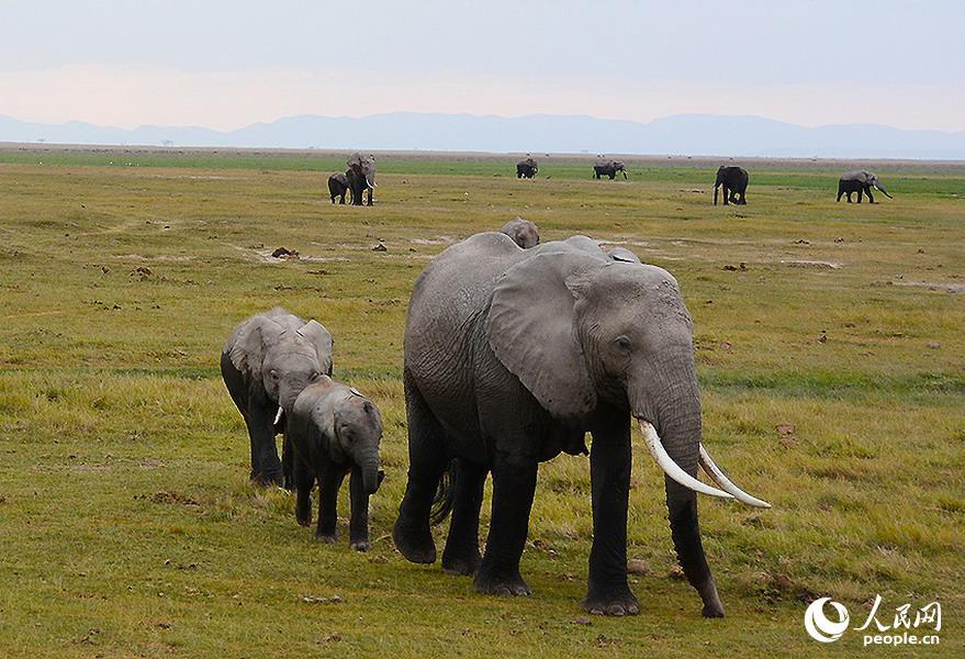 走进肯尼亚的动物世界(组图)