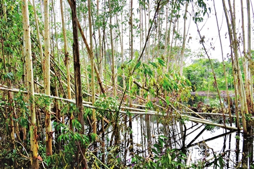 因该处积水较深,园林部门称无法将树扶起