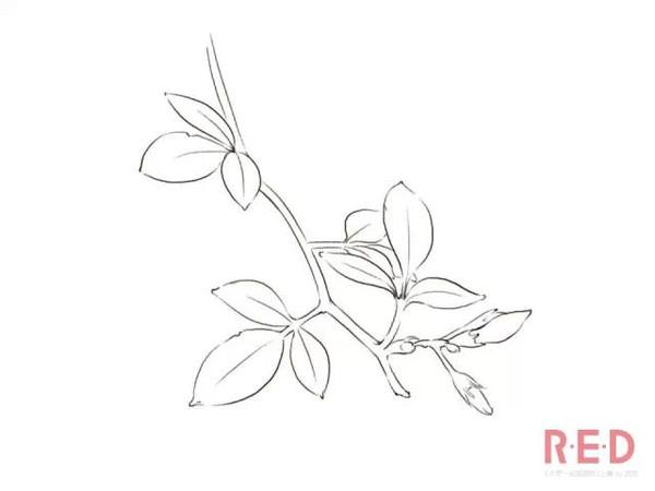 画画教程丨女神教你画之《大家一起画植物》上
