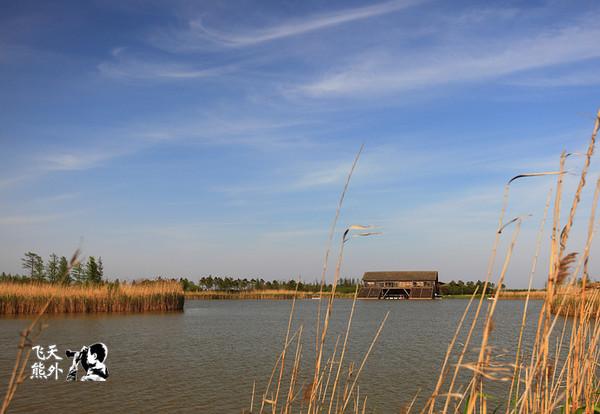 崇明岛:长江尽头的多彩的湿地公园