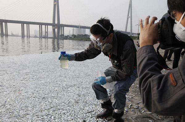 天津日报:海河死鱼无关爆炸 海鱼不适应淡水死亡
