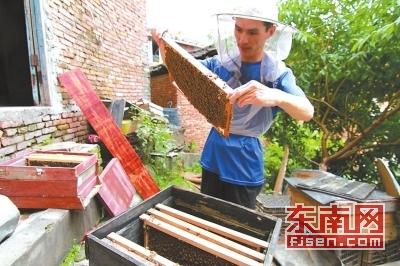 王锦荣正在为蜂箱做日常卫生保洁。