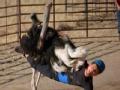 《极速前进中国版第二季片花》第七期 丁子高骑鸵鸟摔地受伤  不甘放弃最终挑战成功