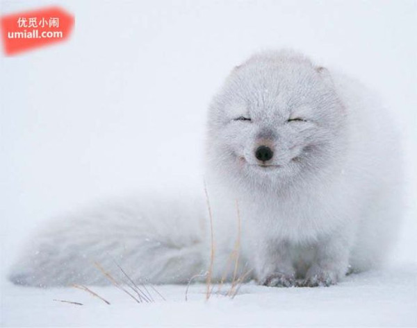 捕捉到野生动物的完美瞬间的照片