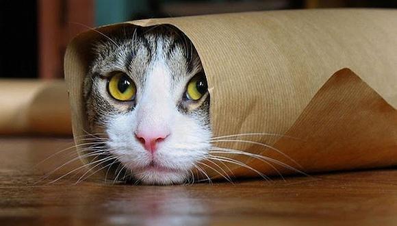 猫咪道歉卡通图片