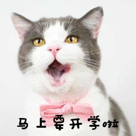 小马上动态v马上大家友情要开学啦怎么把qq的猫咪表情传到微信好友图片