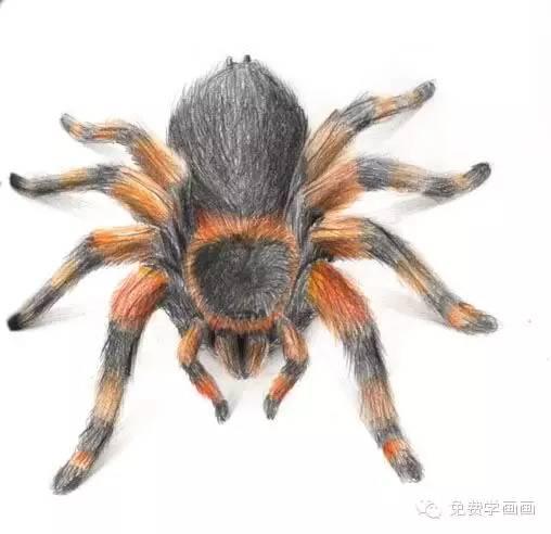 我画的蜘蛛,你也来试试
