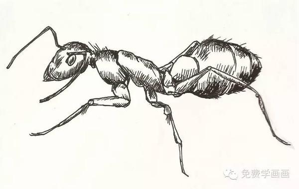 看我画的蚂蚁,你要不要试试