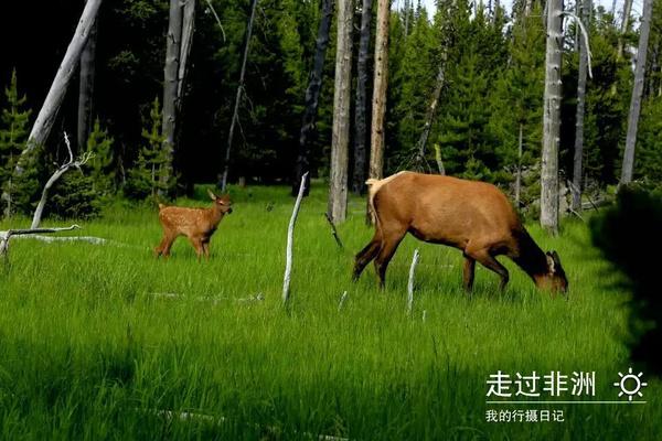 在黄石国家公园与野生动物的亲密接触