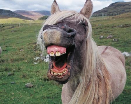 """动物们的""""笑脸""""."""