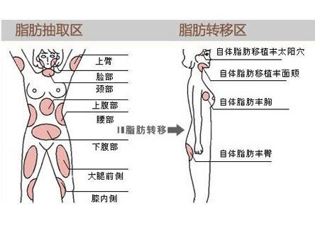 人体脂肪_雷华:美女知道吗?脂肪是人体的\
