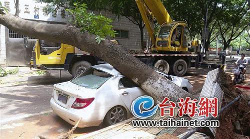 大树倒下轿车变形(图)图片