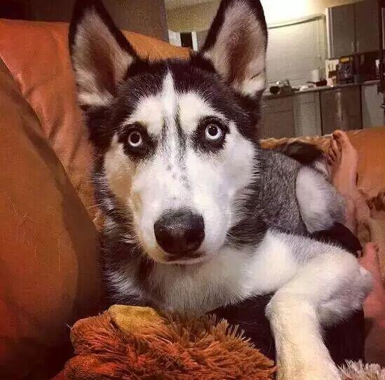 国外有个帅哥,养了只傻狗……然后大家居然发现