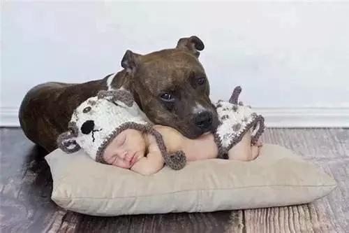 人和动物生的孩子_在与宠物的生活当中,孩子也学会了如何尊重生命,可以确切的体会到动物