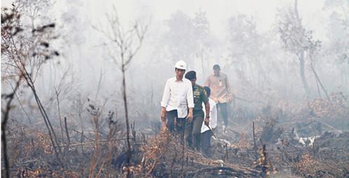 印尼总统佐科视察烧焦森林。路透社