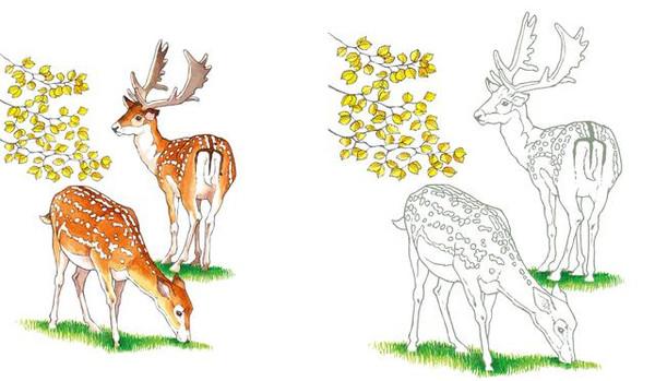 手绘雨淋动物图片