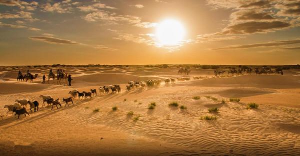 突尼斯 一半是沙漠的热情,一半是蓝白小镇的梦