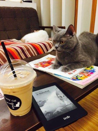 pussy cat咖啡馆--与猫咪度过悠闲下午茶时光