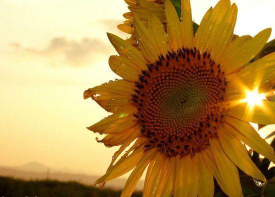 生活需要热情,5句特别阳光的英语句子