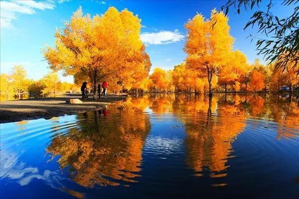 金塔胡杨林-甘肃最美的秋天全在这里,不信进来看