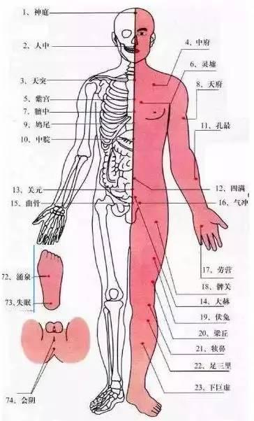 肾在后背哪个位置图-秋后养背,能活百岁图片