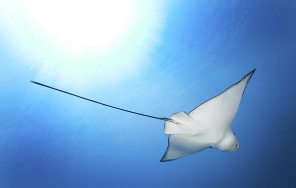 马尔代夫海里的海洋生物